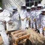 Училище в Дубай отвори пчелин, за да учи децата на любов към природата